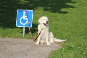 Mon det er varmen, der har kvalificeret hunden til denne plads.