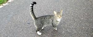Hvis det er din kat, så er det om at få den hentet hjem.
