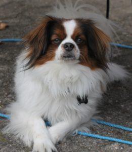 Her er en af Jeanettes to hunde - og den nyder tilværelse i og udenfor rækkehuset.