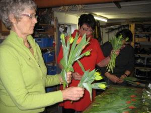 Tulipaner skal hjælpe misbrugere.