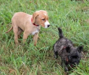 Rigtigt mange hunde-elskere kæmpede imod en barsk hundelov og det ramte turist-erhvervet. <div class=