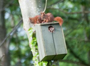 Egern-familien fotograferet af Jørn Lehmann.
