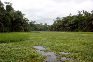 Vandvejen er fyldt med flydende planter.