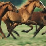 horses-ImageSource