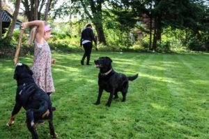 Den kendte hunde-leg: Kast en gren - her med to hunde.