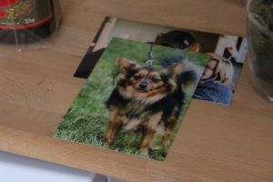 Hundene blev fotograferet hos VetNatura - og ejerne fik billedet med hjem, så det kan hænge ved hundekurven.