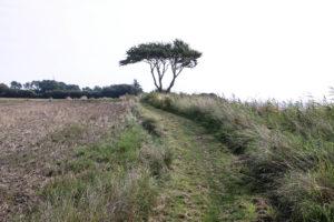 På denne del af stien er underlaget hårdt og ok at cykle på.