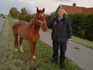 Ole W, Stenshøj startede sin lørdag med at fange heste. <div class=